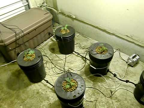 Recirculating Dwc Bucket System