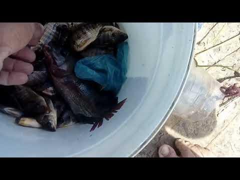 Pacoquinha de tilapia +uma pescaria caipira acude queimadas.