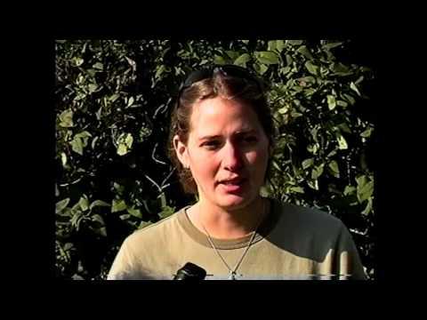OLC - Lake Alice Wildlife  10-1-99