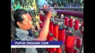Video - Hebat! Petani Pati Mampu Ciptakan Pupuk Organik Cair Murah Meriah [MURIA CHANNEL] Mp3