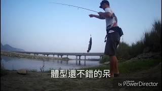 清水溪中了一條蛇頭魚!南投竹山釣況分享(Major Craft BPS-662UL)