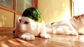 http://ameblo.jp/nosenekoshiro/entry-12300551758.html のせ猫オフィ...