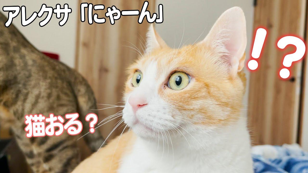 まさかすぎる場所から鳴き声が聞こえて大混乱になる猫たち