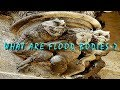 Flood Bodies-What Is A Flood Body ? (mudfossil)