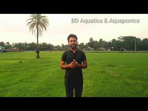 hi welcome to BD Aquatics & Aquaponics