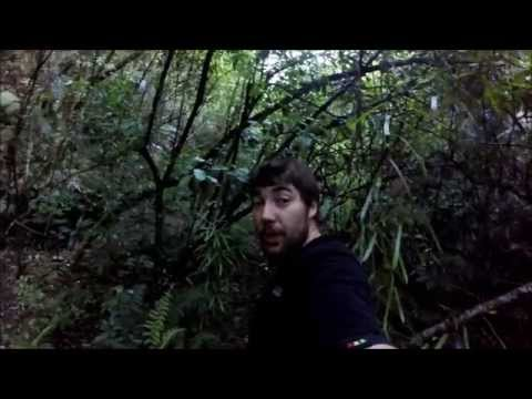 Survival New Zealand - Edible NZ bush