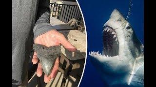 Científicos Encuentran dientes de tiburón prehistóricos y resuelven el misterio