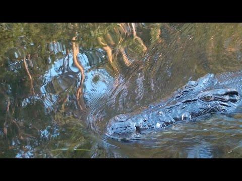 Kakadu Crocodiles