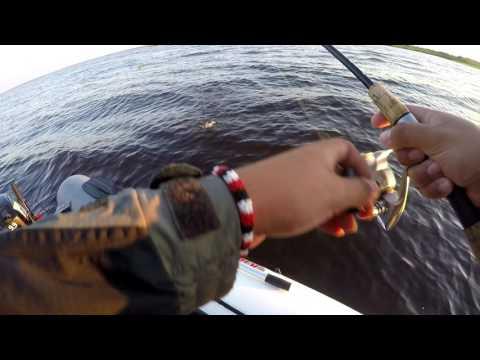 ловля окуня на вертушки понтон 21