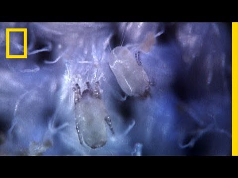 Secret Life of Dust Mites | I Didn't Know That