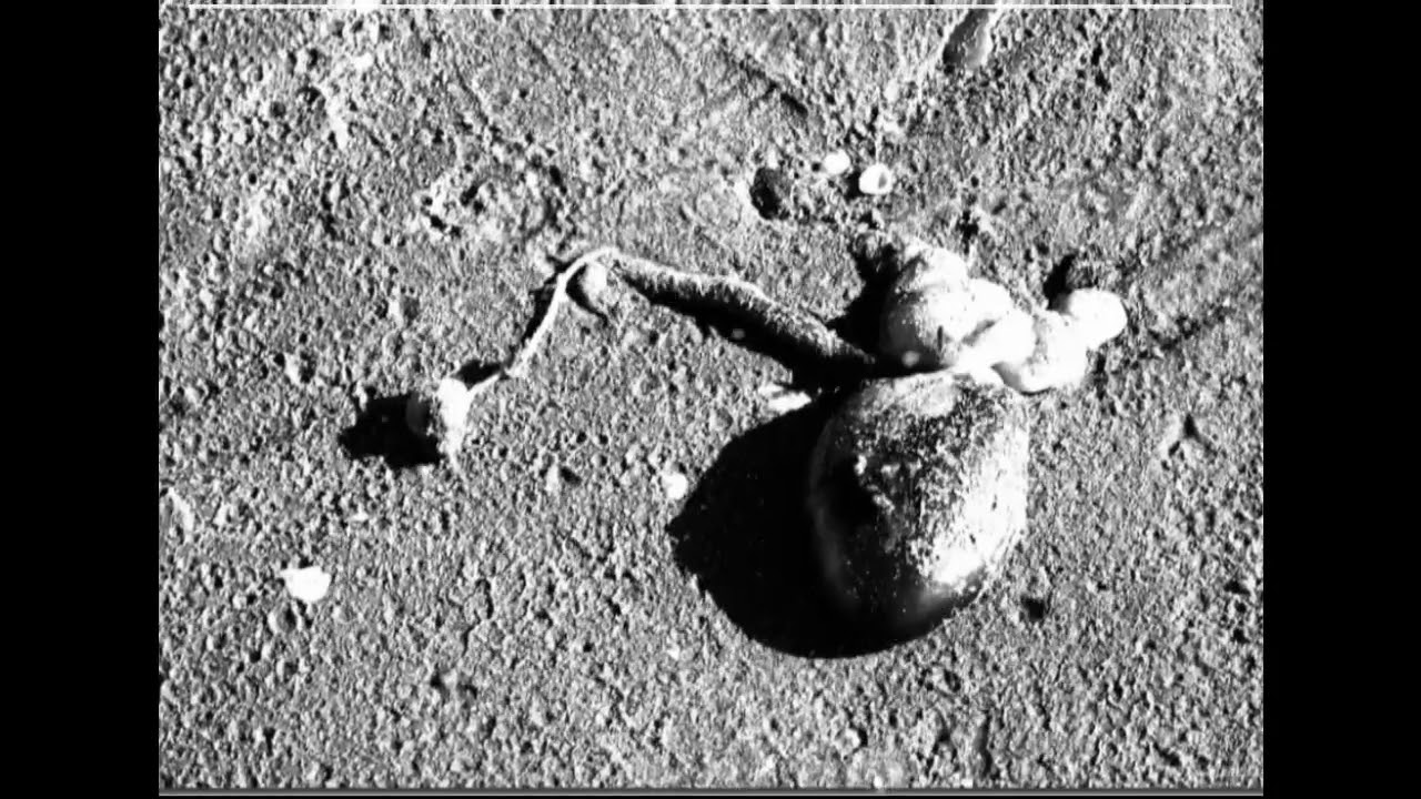 Top Secret Moon Pictures From Nasa - Real Alien Bases On ...