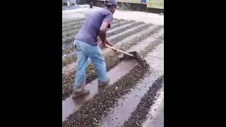 Sistema prático de mudar a leira de local para facilitar a seca do café em caso de chuva.