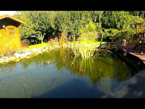 Mein gartenteich mit koi goldfischen youtube for Gartenteich mit goldfischen