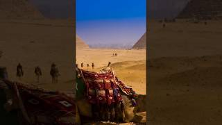 Best Arabic Music|Arabic Whatsapp Status|Best camel views in desert.