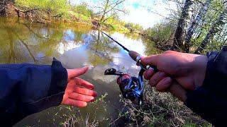 Этих мощных поклёвок я ждал пол года! Голавль на спиннинг весной! Рыбалка на малой реке!