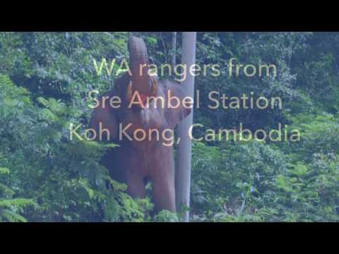 Stop supply&demand of illegal wildlife