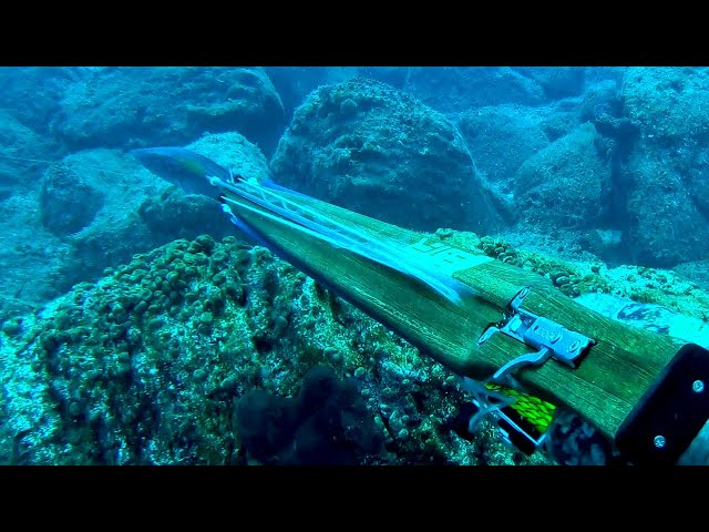 Fish Stalking Prey is Completely Unaware that it is Hunted |Spearfishing Life 🇬🇷