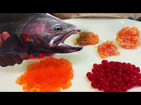 EASY SIMPLE Egg Curing For Salmon & Steelhead Bait + Catching Fishing On The Results!
