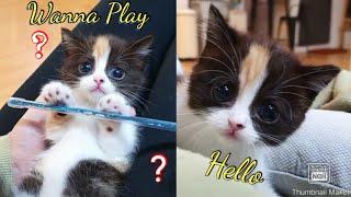The Most Funny Cat Videos 2020 ❤ ❤ مقاطع مضحكة للقطط