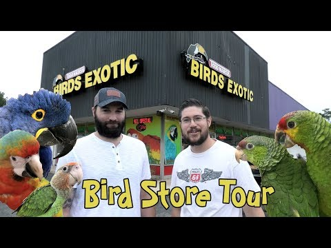 A Personal Tour Of Todd Marcus Birds Exotic Bird Store NJ