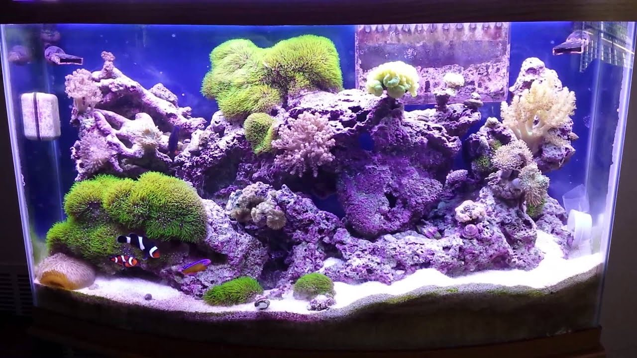 Reef tank saltwater 22 months 46 gallon bow front youtube for Fish only saltwater tank