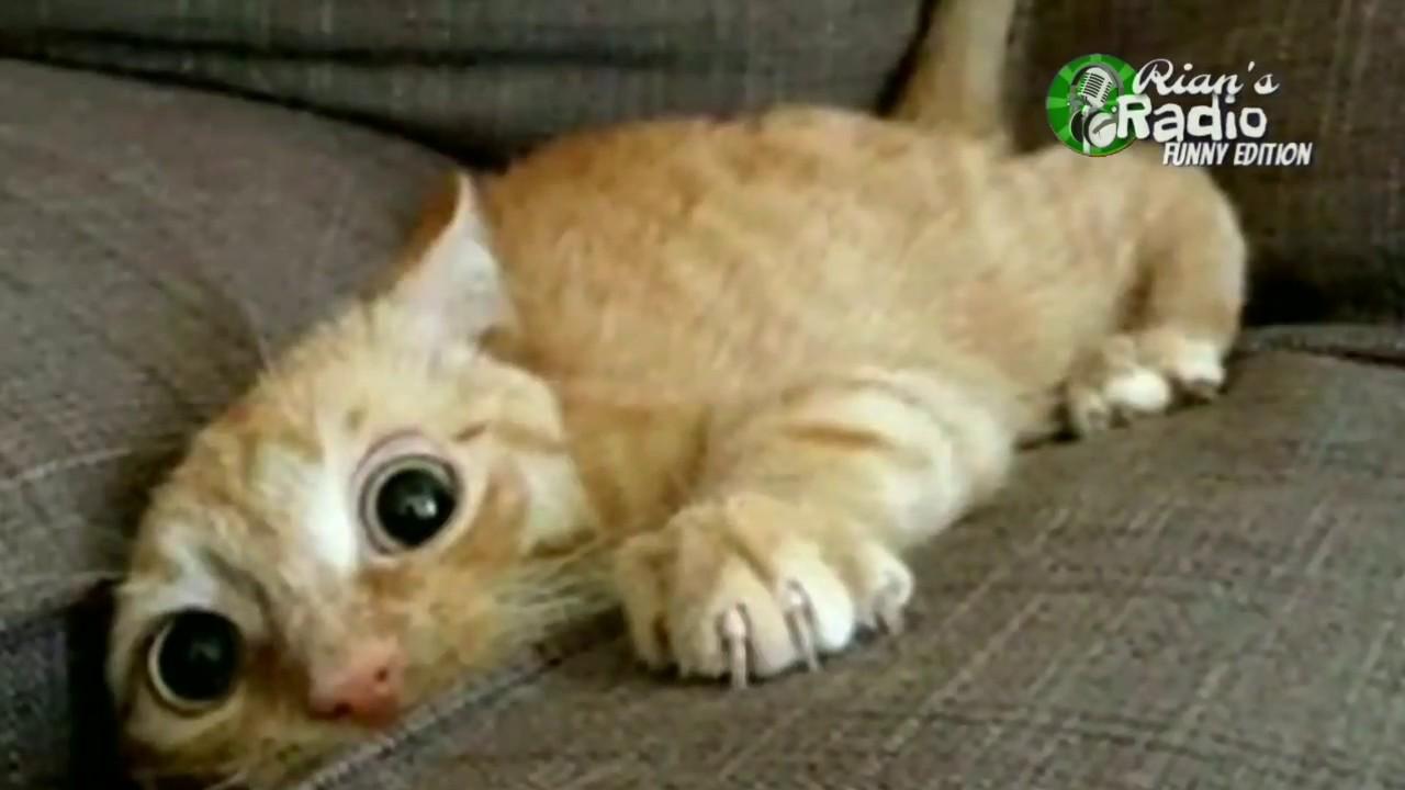 Kompilasi Binatang Lucu - Funny Animal Video Compilation ...