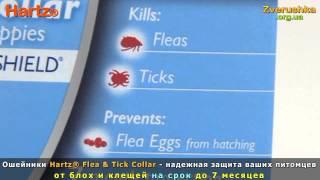Ошейники для собак от блох и клещей Hartz® • Zverushka.org.ua
