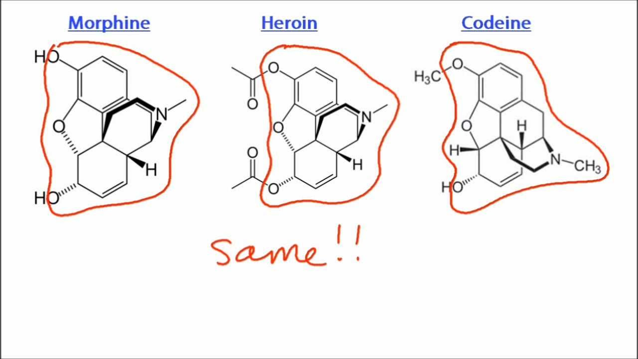 an analysis of the drug codeine and the drug morphine Opiates & opioids: morphine, codeine, & other  active opiates that are found in the opium poppy are morphine, codeine,  opioid drug should only be taken.