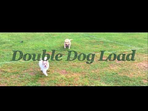 6-Month Old Pomeranian, Lincoln! Pomeranians Off Leash | Pomeranian Dog Training