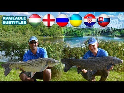 Summer Feeder Fishing Adventures – Grass Carp in Crosshairs  with Gábor Sipos and Tamás Putz
