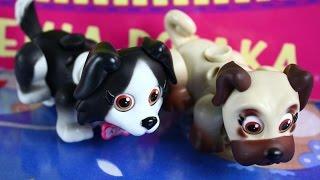 Pet Parade / Академия собака - 2 Dogs / 2 собаки - EPEE - EP02227