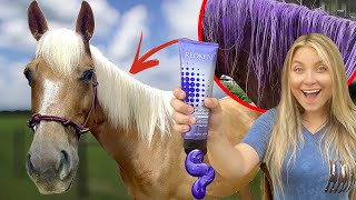 GIVING MY NEW HORSE A MAKEOVER  *SATISFYING*