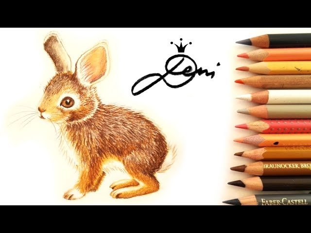Hase zeichnen ????Feldhase malen ????How to Draw a Rabbit ????Bunny Drawing ????Hare paint ??????? ?? ?????? ?