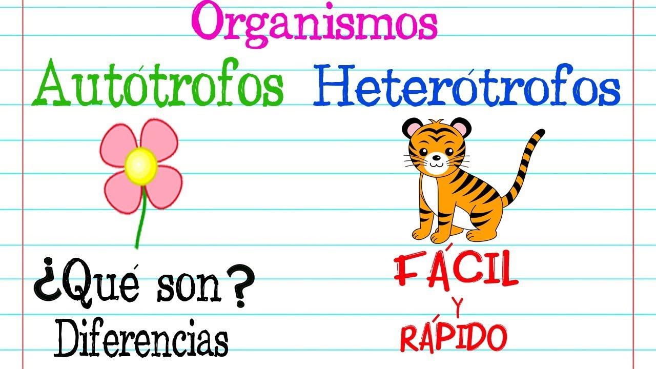Organismos Autótrofos Y Heterótrofos Fácil Y Rápido Biología Youtube