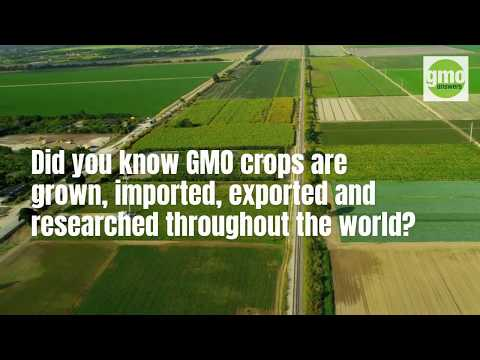 10 GMO crops