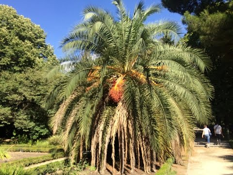 Royal Botanical Garden of Madrid (Madrid, Spain)