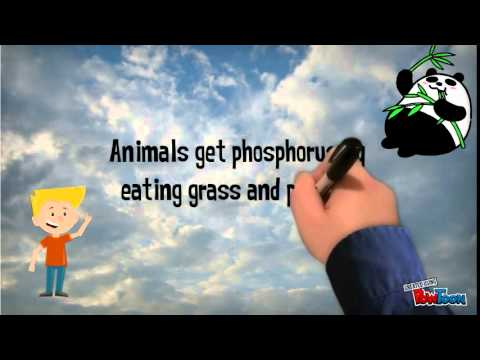 Phosphorus Cycle Animation