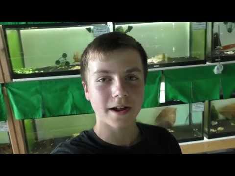 Tour of Shrimp Fever Aquarium Store in Scarborough, Ontario!