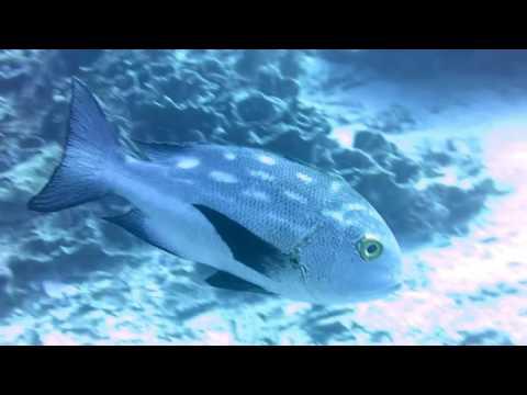Wakatobi - Underwater