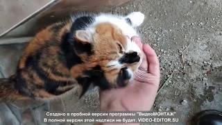 Мультик для детей про домашних животных- кот собака.Развивающий мультфильм малышей. Видео для детей