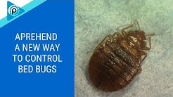 Aprehend (a new way to control bed bugs) (episode 120)