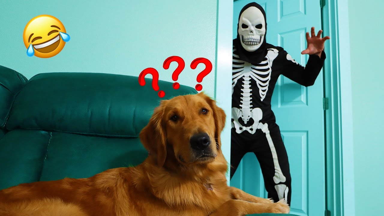 Skeleton Surprises Puppy With Dancing Costume Party!