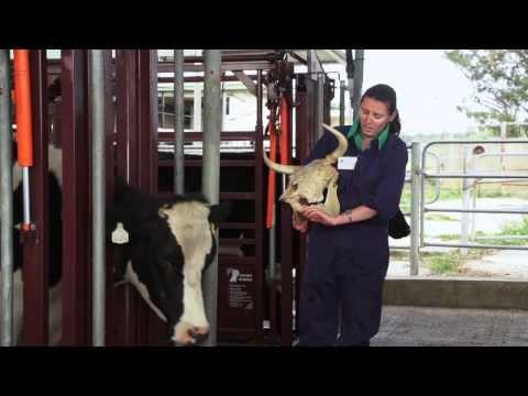 Explore Veterinary Science