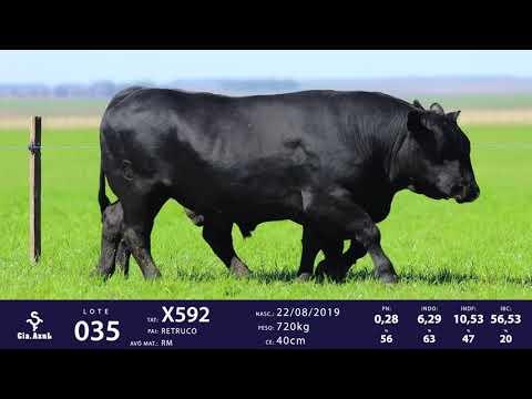 LOTE 35 - TAT X578 X592
