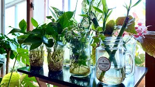수경재배 식물에 비료주는 방법