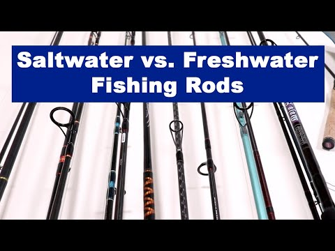 Saltwater Vs. Freshwater Fishing Rods: Differences, Maintenance Tips, And When To Use Each One