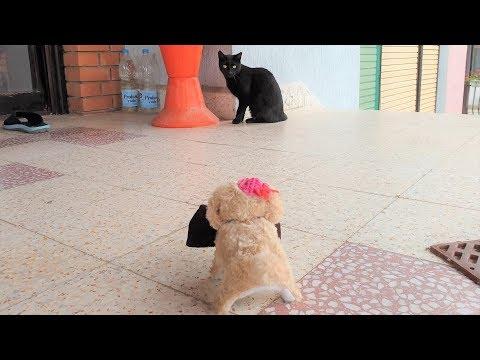 Cat Meets a Robotic Dog
