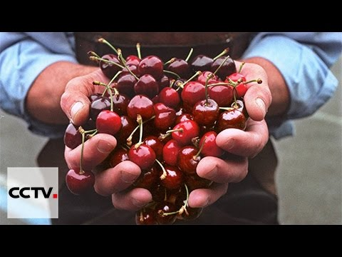 Cherry exports grow to match Chinese demand