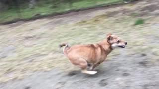 「保護犬とドッグランに行こう!」保護犬・保護猫との暮らしと感動秘話 ...