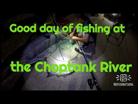 Fishing For Striped Bass At The Choptank River
